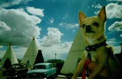 Holbrook AZ Floyd at the Wigwam Motel