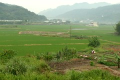 (judie35) Tags: summer field taiwan sanyi
