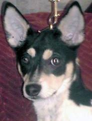 2003-03-15 - Peedee's LL Dog Rescue Listing