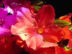 Flores na Capela ! (crenan) Tags: flowers flores macro me beauty d50 interesting nikon calendar natural photos natureza fast explore santamaria score blueribbonwinner d80 scoremefast cmeradeourobrasil crenan grupo1a10brasil visofotogrfica carlosrenanpiressantos