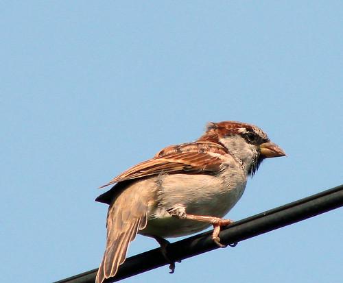 birdonwire4