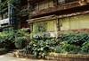 Gallery 華音留 (gracias!) Tags: green film japan architecture tokyo pentax ivy aoyama omotesando mz5 表参道 dojunkaiapartment 同潤会青山アパート