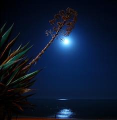 Beach at night revisited (pmsmgomes) Tags: lighting light sea sky moon plant slr beach portugal night digital reflections stars nikon d70s algarve pmsmgomes armaodepera nikonstunninggallery fivestarsgallery abigfave frhwofavs