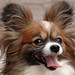 Shadow is frenzied_Pet Sitters Wimberley Texas