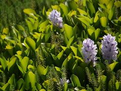 Flores (Cepeda) Tags: verde flres