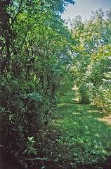 60 - Red Oak 3 (evilmousse) Tags: discgolf redoak burnsville