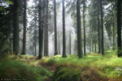 after the rain II (*Sabine*) Tags: travel trees nature forest germany landscape bayern deutschland bavaria woods europa europe hiking natur landschaft wald bume wandern wanderung bayerischerwald bavarianforest utatafeature goldenpath abigfave goldentrail goldenersteig saltpath cotcbestof2006 haidel utata:project=upfaves bavaria2006 auswahl:jahr=2006 year:uploaded=2006 sabinesteinmller