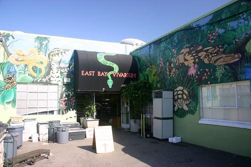 california animals berkeley store turtles monitors eastbay terrarium reptiles vivarium warane