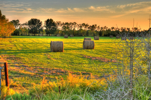 http://farm1.static.flickr.com/88/264507903_b76c69c276.jpg