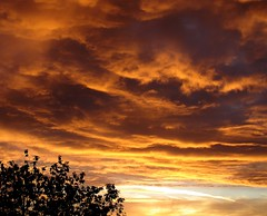 Dawn (james_michael_hill) Tags: uk morning england sky orange tree beautiful silhouette clouds sunrise dawn early surrey coulsdon jmh jamesmichaelhill its7am twtmesh05089