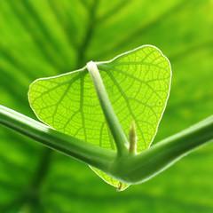 Greeny gorgeousness *4 (cattycame