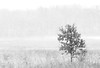 Less is more (Mingfong) Tags: trees winter blackandwhite bw white snow tree monochrome wisconsin march spring peace snowy arboretum minimal story madison albumcover minimalism stories simple 雪 strom 黑白 less singletree 藝術照 白色 lessismore 白 桌布 uwmadisonarboretum 雪地 寒冷 mingfong 風景攝影 黑白攝影 musicflyer 風景桌布 mingfongjan 雪國 雪白 artbrochure 雪日 sketchoflight mingfongphotography 黑白風景攝影 白色桌布 黑白桌布