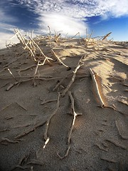 the fallen city (liam.jon_d) Tags: west landscape coast surrealism dunes south australian surreal australia paisaje australien paysage imagemanipulation landschaft southaustralia paesaggio yalata postprocessing digitalartwork canonpowershotpro1 delsur  greataustralianbight  laustralie dusud  aboriginallands billdoyle  laustralia sdaustralien delsud