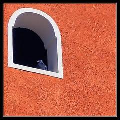 Paloma en ventana (jose_miguel) Tags: españa orange color colour window miguel ventana spain bravo searchthebest dove jose paloma morocco maroc chapeau marrakech fv10 marrakesh marruecos naranja canondigitalixus55 gtaggroup fivestarsgallery marraquech abigfave