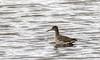 9Q6A8143 (2) (Alinbidford) Tags: alancurtis alinbidford brandonmarsh nature redshank waders wildbirds wildlife