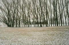 (Džesika Devic) Tags: leicam6 leica streetphotography winterscene snow trees house winter ontario canada