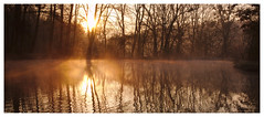 Sunny Sunday (Max Angelsburger) Tags: silhouette deutschland germany badenwürttemberg badenwuerttemberg grosglattbach village natur light dawn bright mood wald wood wanderlust hiking exposure view mist damp fog smoke wooden countryside sun sunrays golden yellow landscape landschaft march 2018 weather walk pretty spring mystic magic gold nature calm beautiful morning trees reflection tree atmosphere weekend valley soft freezing crisp crispy naturereserve romantic silence grass white grosglattbacherriedberg