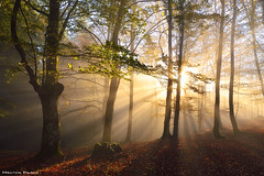 Forest Symphony (Hector Prada) Tags: bosque forest sun sol otoño autumn luz light hojas leaves sunny sombras shadows rural woods hayedo beechforest niebla fog mist bruma mágico magic naturaleza nature sunbeams mystic paísvasco basquecountry