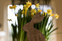 Happy Easter! (michael_hamburg69) Tags: hamburg germany deutschland narzisse teteatete narcissus yellow gelb flower blume blossom blüte ostern easter bunny wood wooden hase osterhase decoration