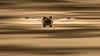 IMG_0015 (Calabrones) Tags: schlospark nymphenburg schlosparknymphenburg erdkröte kröte münchen münchnerwildnis