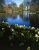Spring of Keukenhof (tlw1012) Tags: analogue film ga645w keukenhof e100vs