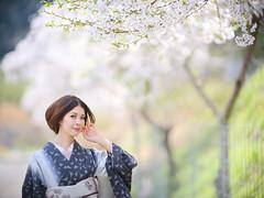 桜艶風香 (HarQ Photography (Staying in Australia 5/7-5/28)) Tags: zhongyioptics fujifilm fujifilmxseries gfx50s portrait japan sakura cherryblossom spring kimono bestportraitsaoi