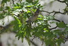 Destination Unknown (Robin Shepperson) Tags: d3400 nikon bird flight fly flying leaves tree trees wildlife balcony tamron berlin germany nature green brown spring