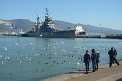 Russia. birds in the bay of Novorossiysk (Kira Pichano) Tags: cruiser mikhail kutuzov monument tsemesskaya bay city novorossiysk russia black sea gulls war kuban caucasus ship