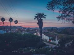 Santa Cruz (flrent) Tags: santa cruz california palm tree mountain river beach city coast northern view sunset dusk sf bay area 17