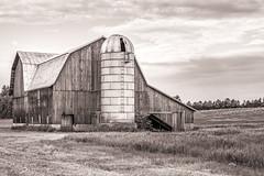 Old Michigan Barn & Silo (mjhedge) Tags: ruralmichigan michigan puremichigan barn rural silo monochrome country