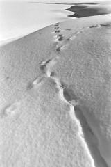 Schräg II (ambient norge) Tags: analog praktica prakticamtl50 fomapan100 norway norge norwegen landscape blackwhite schwarzweis schwarzundweis