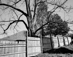 Happy Fence Friday Flickr Friends! (RansomedNBlood) Tags: iphone8 bw blackandwhite fencedfriday