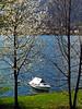 Primavera in riva al lago (frank28883) Tags: lagodorta cusio riva barca fioriciliegio ciliegio