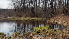 Pond (joeldinda) Tags: tree cloud reflection pond sky battlecreek michiganaudubon meadowandmarshlandtrail bellevue 4082 bernardbakersanctuary em1ii em1 april omd omdem1mkii 20180422bakersanctuaryem1raw1374082 olympus bakersanctuary michigan 2018