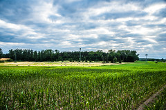 Uckermark landscape (potto1982) Tags: 2018 landscape landschaft brandenburg nikon korn uckermark feld felder nikond810 angermünde landschaftsbild