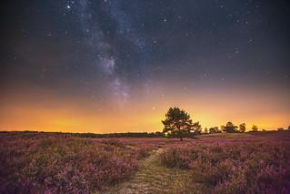 Die Milchstraße über der Nemitzer Heide