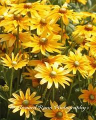 Manoff Farms  (28) (Framemaker 2014) Tags: mangas farm market gardens bucks county southeastern pennsylvania flowers united states america new hope