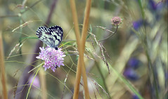 Butterfly and hidden bug/ Mariposa y bicho escondido (PURIFM) Tags: nikon butterfly mariposa