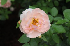 Bellingrath Gardens and Home 2018 rose garden Heaven on Earth (MJRGoblin) Tags: mobilecounty 2018 theodore alabama