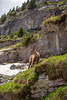 Haute Giffre (Josh Patterson Photo) Tags: frenchalps alps france hautegiffre ibex mammals mammal wildlife river rivers hiking mountains mountain europe samoen waterfalls waterfall nature valley valleys cliffs