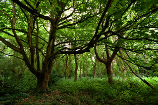 Scadbury Park Nature Reserve, Chiselhurst  -  (Selected by GETTY IMAGES)