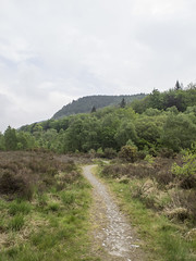 (Turbogirlie) Tags: devilsbridge ystwythvalley midwales ceredigion cymru leadmine afonystwyth mountains cambrianmountains trees naturalresourceswales forestrycommission secluded tranquil hafod grogwynion naturereserve bluebells