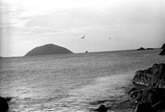041269 31 (ndpa / s. lundeen, archivist) Tags: nick dewolf nickdewolf blackwhite photographbynickdewolf bw 1969 1960s 35mm film monochrome blackandwhite april usvi virginislands usvirginislands stthomas caribbean coast water ocean watersedge beach bay hullbay rocks rocky island brassisland outerbrassisland bird birds sea sky clouds