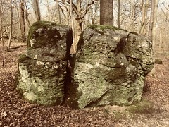 """Woodland rocks. (Bennydorm) Tags: stones stone texture """"leaflitter"""" wild rural countryside nature trees iphone5s march outdoor inghilterra inglaterra angleterre europe uk gb britain england cumbria furness ulverston bardsea woodland old big ancient boulders rocks"""