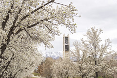 Bell Tower in Shades of Spring White (aaronrhawkins) Tags: tower bell carillon byu brighamyounguniversity blossom spring white pink mountain provo utah bud grow season cloudy overcast bright campus university college aaronhawkins