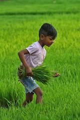 Chitwan, Nepal (dderici) Tags: chitwan nepali nepal portrait child rice fields canon7d 70200