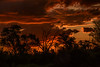 BOTSWANA: SUNSETS (John C. Bruckman @ Innereye Photography) Tags: botswana okavangodelta wetseason droptheirbabies babies expeditionleader lightning storms precipitation landrovers sunsets stuckinthemud coth5