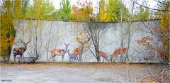 The Pripyat Amusement Park (Aad P.) Tags: chernobyl чорнобиль pripyat припять ukraine україна sovietunion cccp nuclearpowerplant radioactivity radiation urbex urbexphotography exclusionzone may1st may1stcelebration unused abandoned amusementpark deers