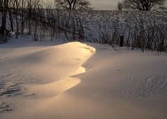 Schneewehe (michaelmueller410) Tags: snow schnee schneewehe snowdrift drif grass gras meadow wiese sunlight sonne licht winter frühling eis ice cold sturm storm drift