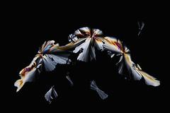 Something strange (Henri Koskinen) Tags: abstract abstrakti kide kiteet crystals crystal citric acid sitruunahappo 23032018